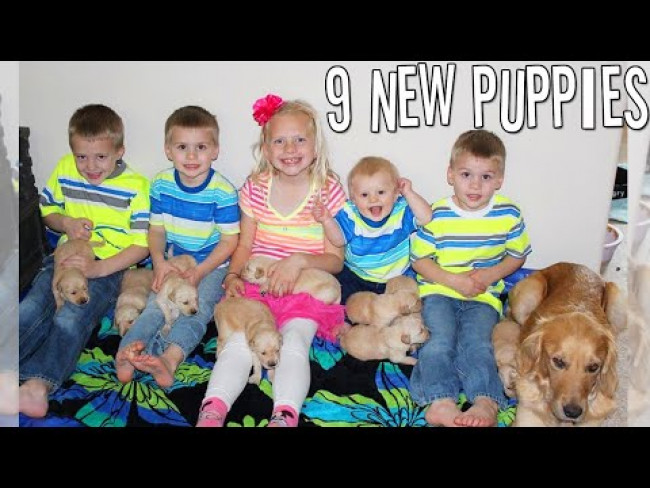 9 NEWBORN Puppies! SO CUTE!