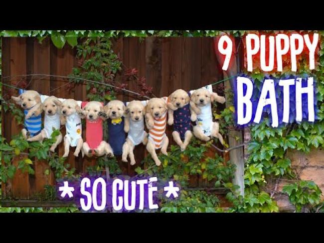 9 Puppy Bathtime Routine