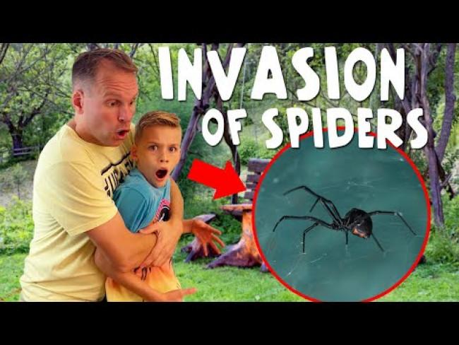 Black Widow Infestation!!