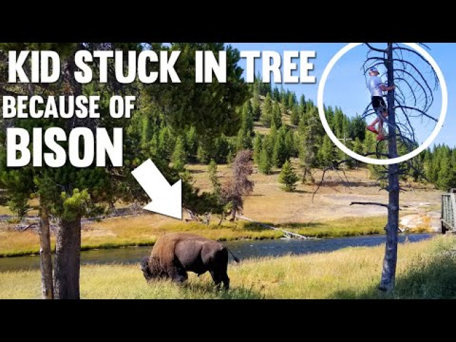 Chased Up a Tree by a BISON!!