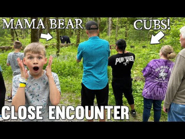 Crazy Bear Cubs Encounter in Tennessee!