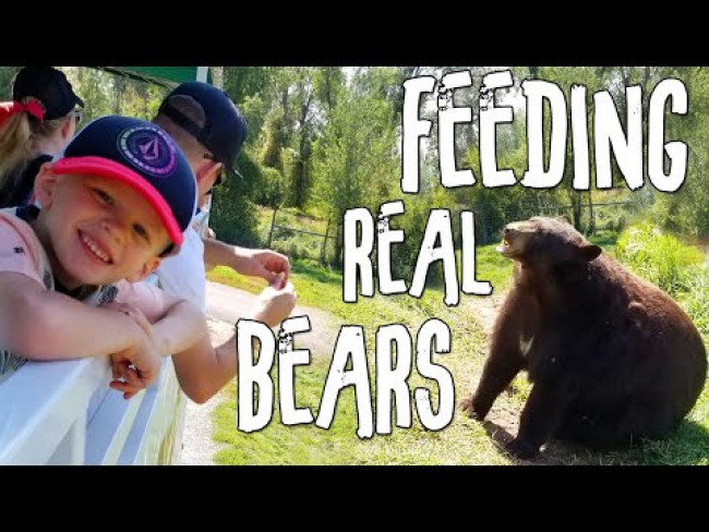 Feeding REAL Bears!!