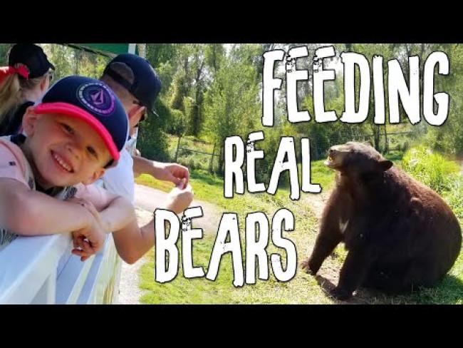 Feeding REAL Bears!!