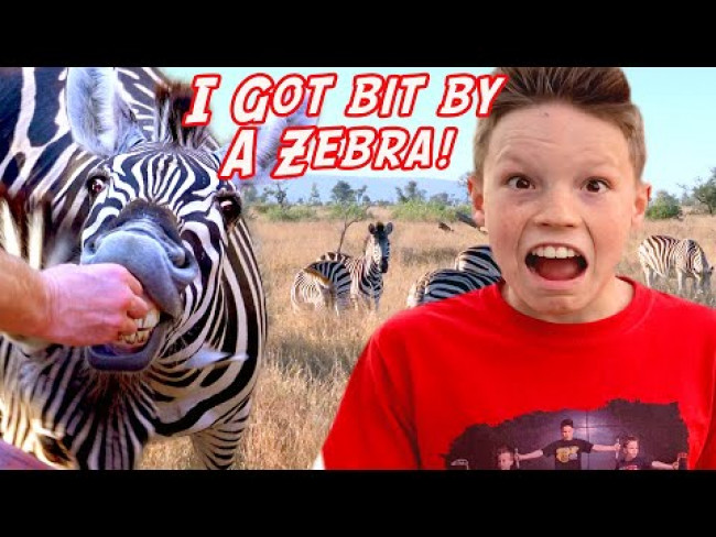 I got bit by a Wild Zebra in Africa!