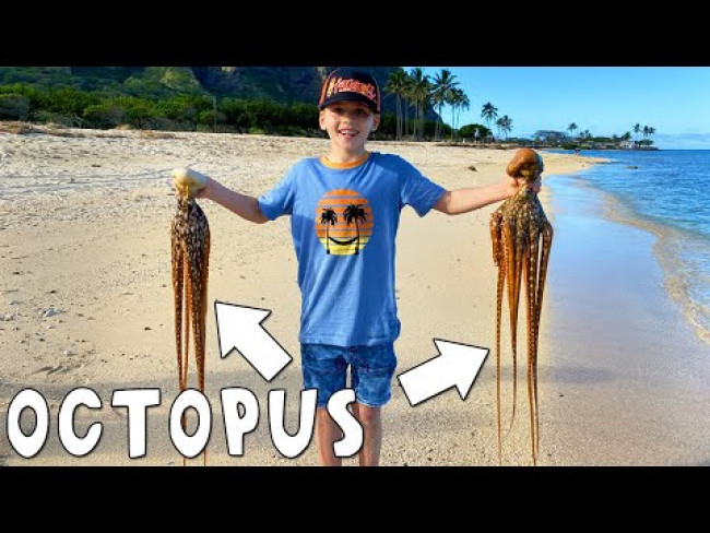 LIVE OCTOPUS FIND!