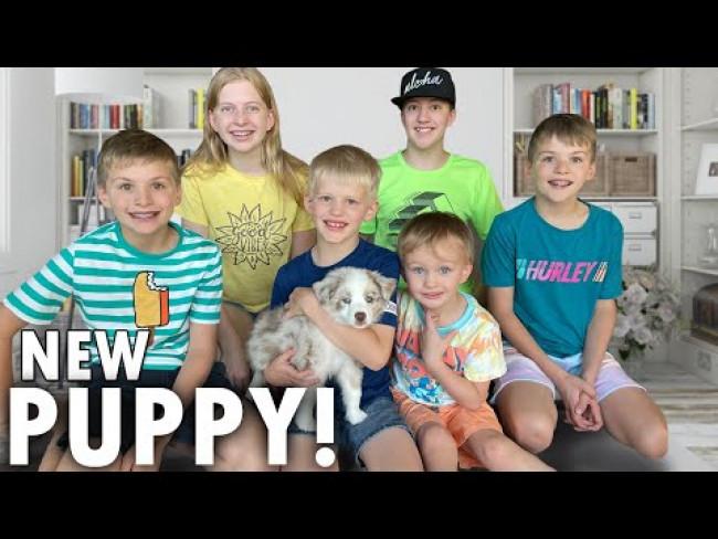 NEW PUPPY SURPRISE!