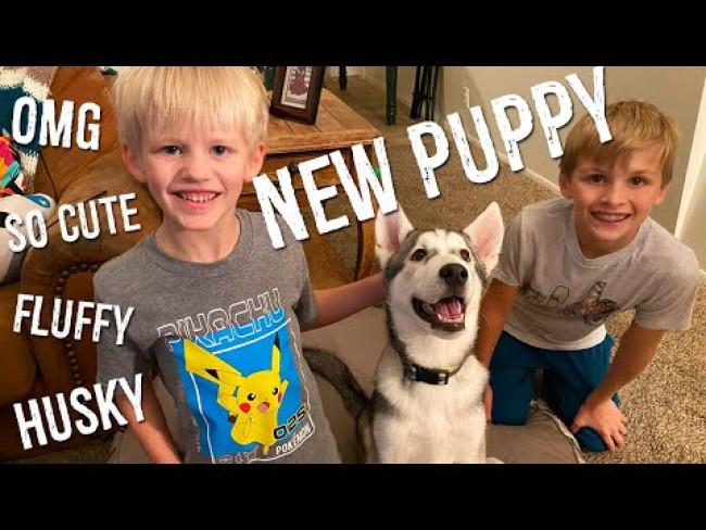 NEW PUPPY!!!