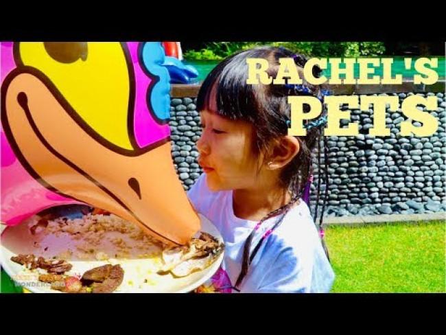Rachel's Pets