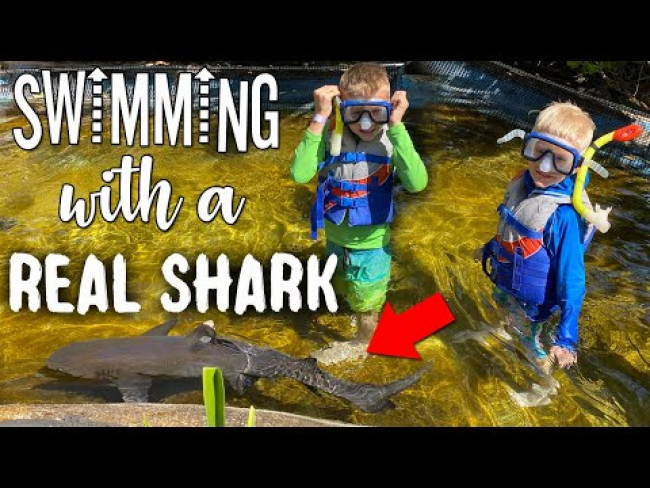 SWIM WITH REAL SHARKS & STING RAYS!