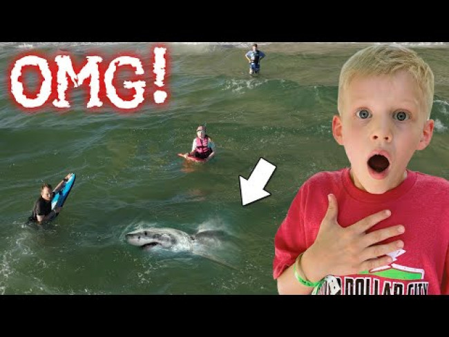 We Had NO IDEA a Shark Was Swimming Next to Us!